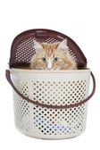 Puss in carrying — Stock Photo