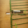 Single house on cultivated land — Stok fotoğraf