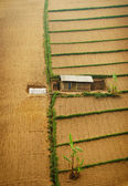 Single house on cultivated land — Stock Photo