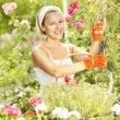 A woman gardener pruning roses in a rose garden — Stock Photo