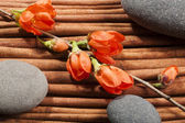 Oval river's stones with a sprig of flowers. — Foto de Stock
