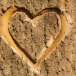 Heart carved in the bark of a tree. — Stock Photo