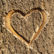 Heart carved in the bark of a tree. — Foto Stock