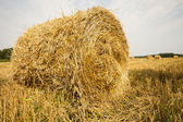 Straw bales rolled up, the crop stubble. — Stock Photo