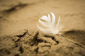 White bright feather pressed into the sand. — Stock Photo