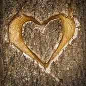 Symmetrical heart carved in the bark of a tree. — 图库照片