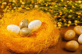 Painted eggs decorated by various colors in the nest  - symbols of Easter. — Stock Photo