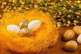 Pintou ovos decorados por várias cores no ninho - símbolos da páscoa. — Fotografia Stock