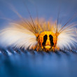 Caterpillar of night butterfly. — Stock Photo #47796661