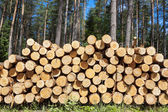 Felling of the forest, wood for fireplaces — Stock Photo