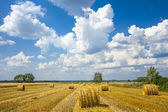 Straw bales rolled up, the crop stubble — Stock Photo