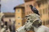 Life on the monument :-) — Fotografia Stock