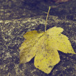 Stock Photo: The yellow leaf in autumn