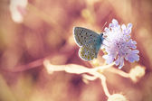 Little butterfly on pink flower — Stock Photo
