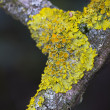 Lichens in autumn in wood — Stock Photo #36115481