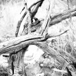 Dried branch in B&W — Stockfoto