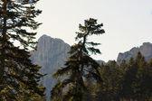 Herfst op de alpen van italië — Stockfoto