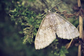 Little butterfly on the moss — Stock Photo