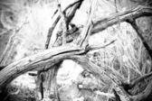 Dried branch in B&W — Stock Photo