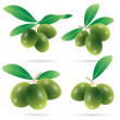 Set of olives vector — Stock Vector