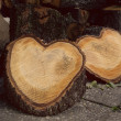 Woods shaped as hearts — Stock Photo