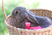 Cute bunnies outdoors — Stock Photo