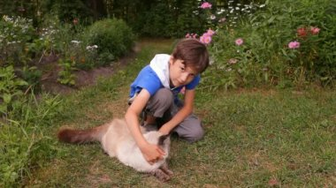 Boy, child petting a cat in nature — Stock Video