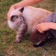 Stock Video: Boy, child petting cat in nature