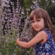 Girl hugging bush sage flowers — Stock Video