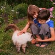 Stock Video: Boy and girl, brother and sister, children petted cat in nature