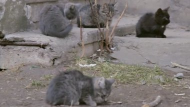 Kittens sitting in the street — Stock Video