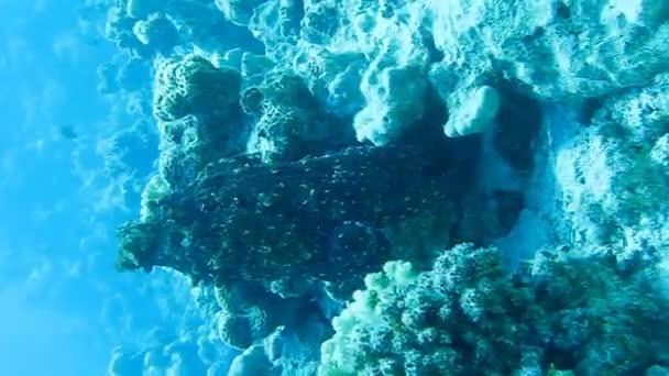 reef голубой
