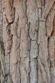 树树皮 — 图库照片