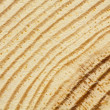 Closeup of pine tree texture with scratches — Stock Photo #41040245