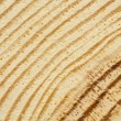 Closeup of pine tree texture with scratches — Stock Photo