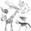 Vector set: wild and domestic animals — Image vectorielle