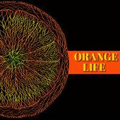 Vector Illustration of Orange Fruits. — Stock Vector