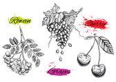 Art illustration of watercolor fruits. Vector EPS — Stock Vector