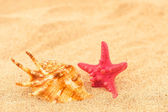 A shell and a starfish — Stock Photo