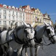 Stock Photo: A team of horses in Prague