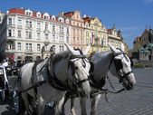 A team of horses in Prague — Stock Photo