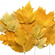 Composition of autumn leaves. — Stock Photo
