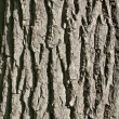 Oak bark's texture vertically. — Stock Photo