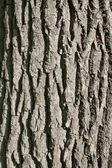 Oak bark's texture vertically. — Stock Photo