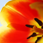 Detail of flowers - Macro — Stock Photo