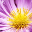 Detail of flowers - Macro — Stock Photo