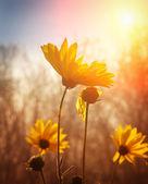 Bloemen bij zonsopgang — Stockfoto