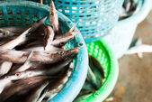 Fresh fish in a basket — Stock Photo