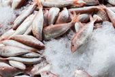 氷の上で新鮮な魚 — ストック写真