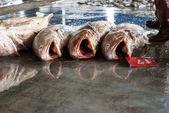 Fresh big fish on ice — Stock Photo